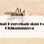 Ketahui Penyebab dan Gejala Chikungunya